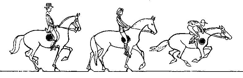 невыезженная лошадь 4 буквы - фото 10