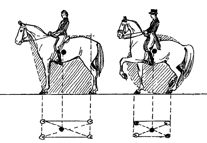 невыезженная лошадь 4 буквы - фото 3