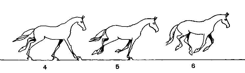 невыезженная лошадь 4 буквы - фото 11