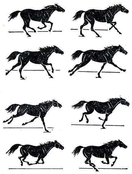 Схема движений лошади на