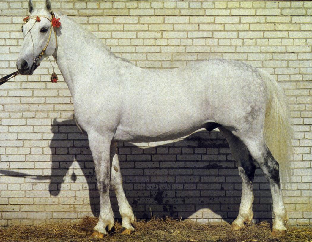 Пион Дубровского конного завода чемпион и рекордист орловской породы; резвость на 1600 м 2 мин 0,1 с