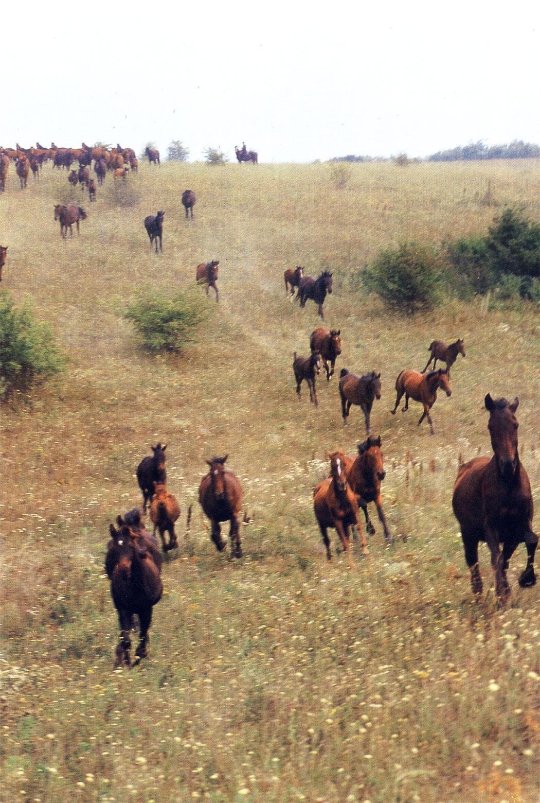 На лошадях украинской породной группы советские спортсмены неоднократно побеждали в крупнейших международных соревнованиях, включая Олимпийские игры. В движении на пастбище с первых дней жизни закаляется здоровье, крепнет мускулатура, развиваются легкие и сердце. Все  это - ценные качества хорошей спортивной лошади