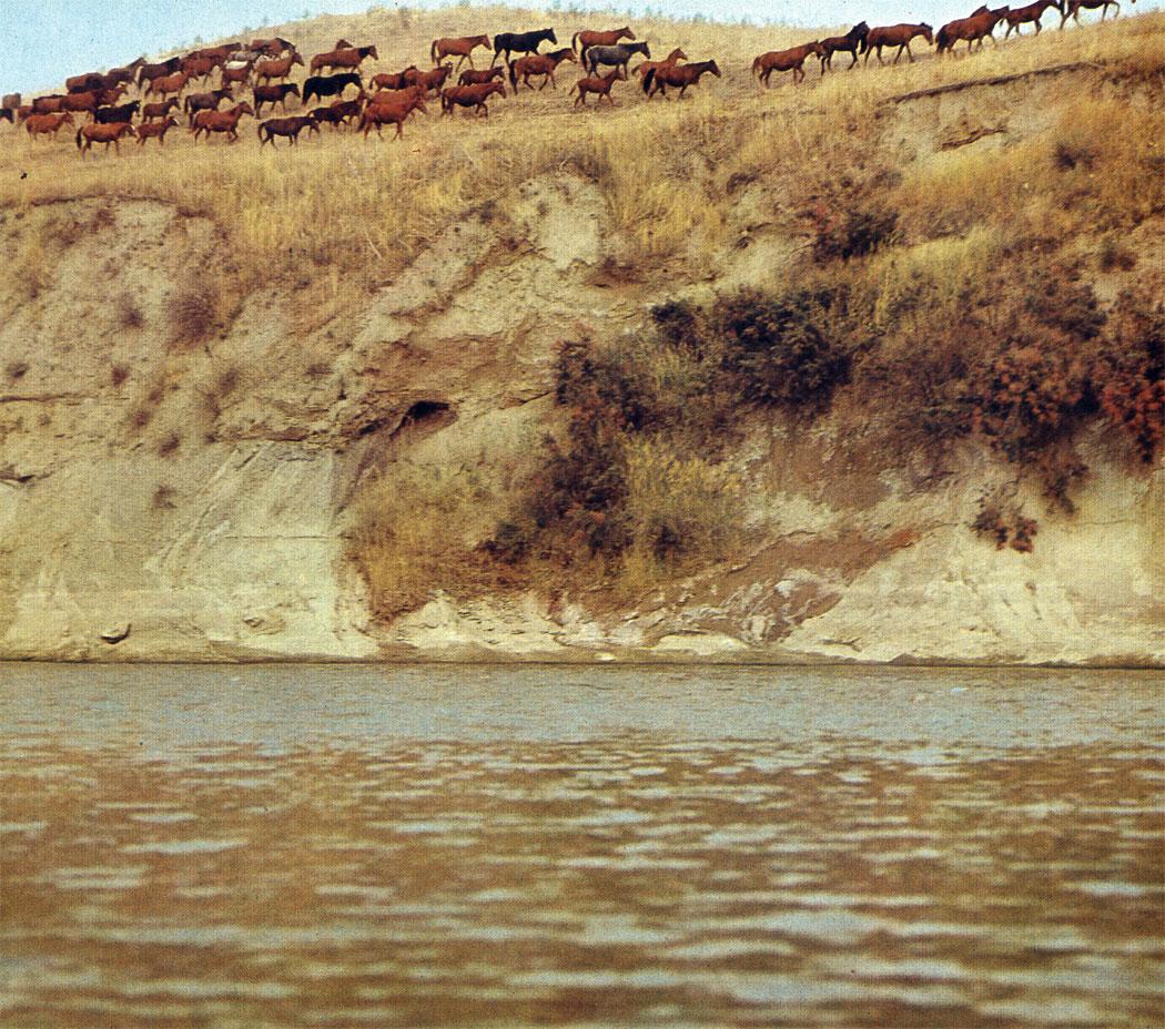 Табун карабаирских лошадей