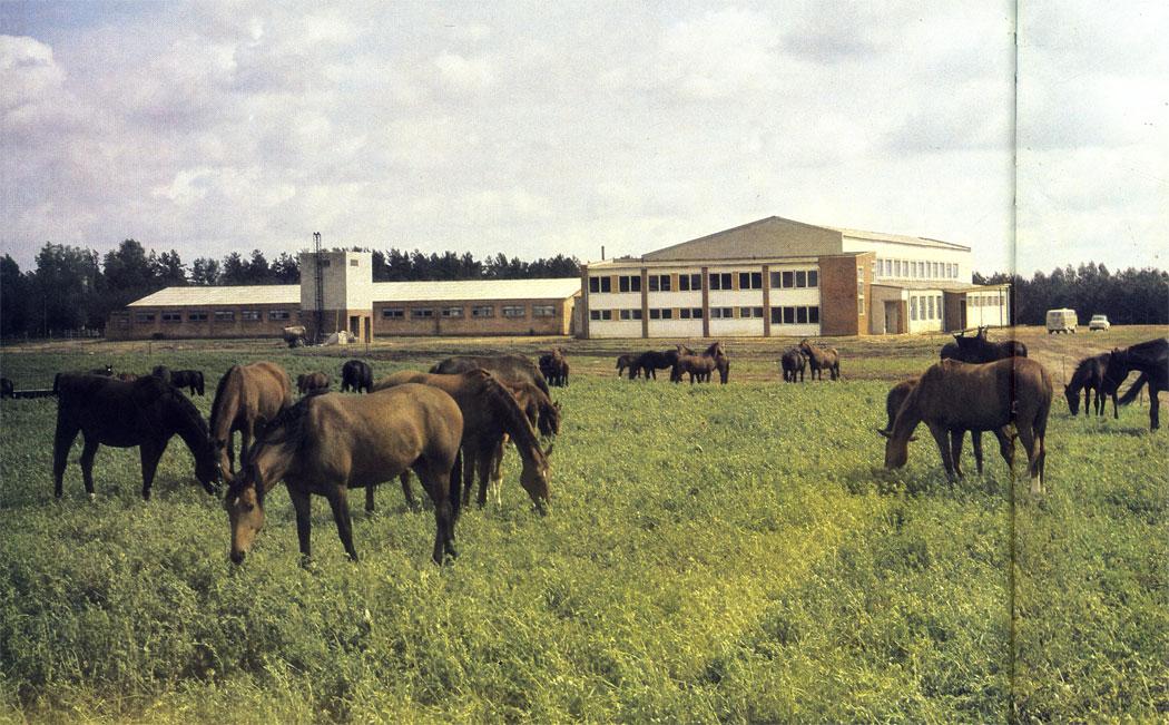 Ферма племенных лошадей латвийской породы в колхозе