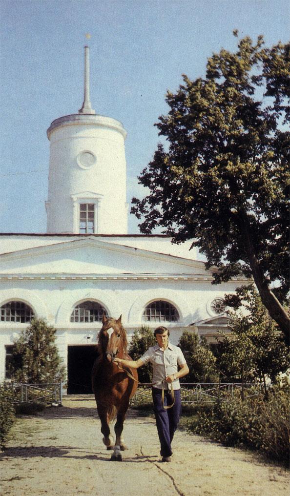 В Новоалександровском конном заводе Украинской ССР