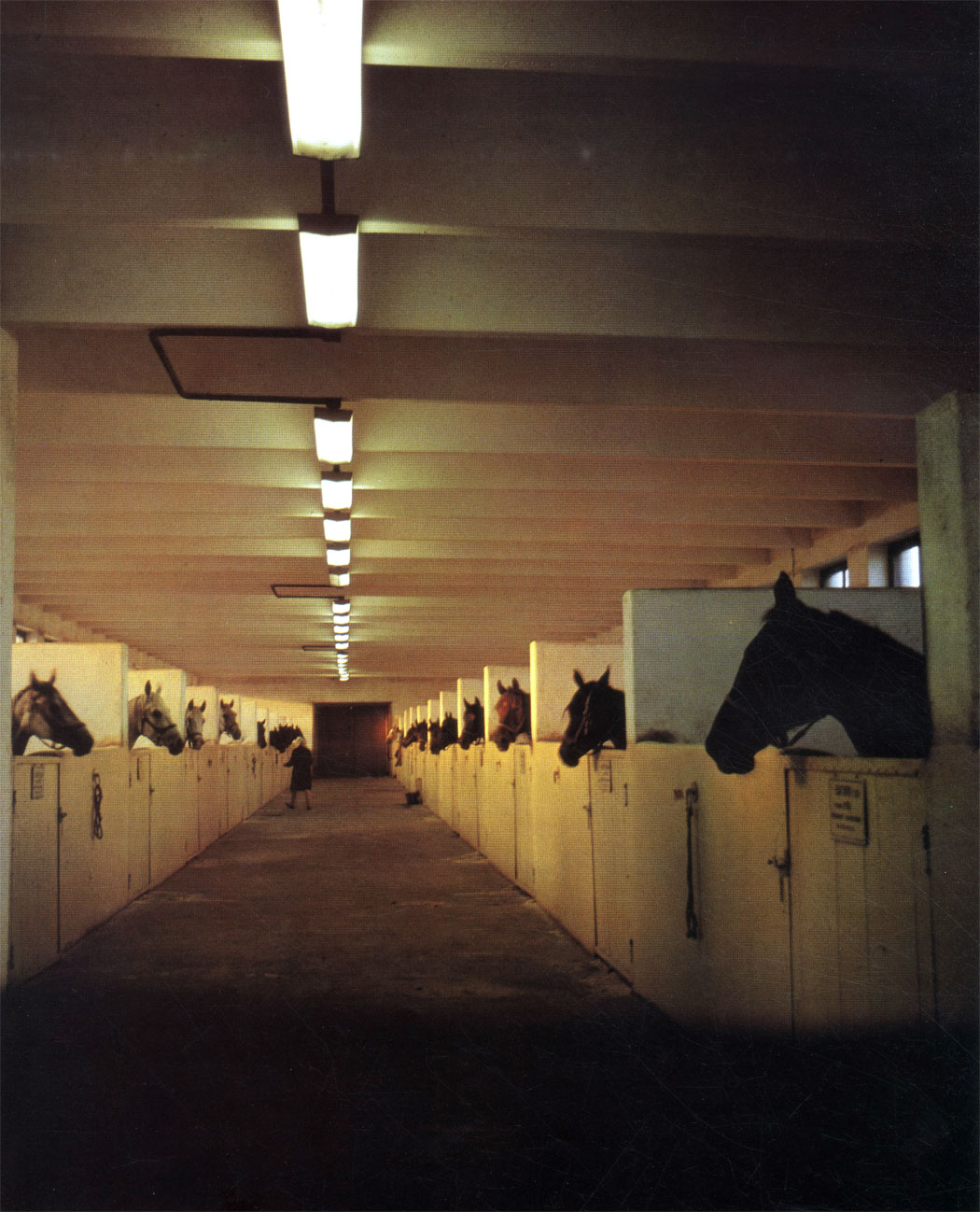 Конюшня для племенных лошадей Московского конного завода