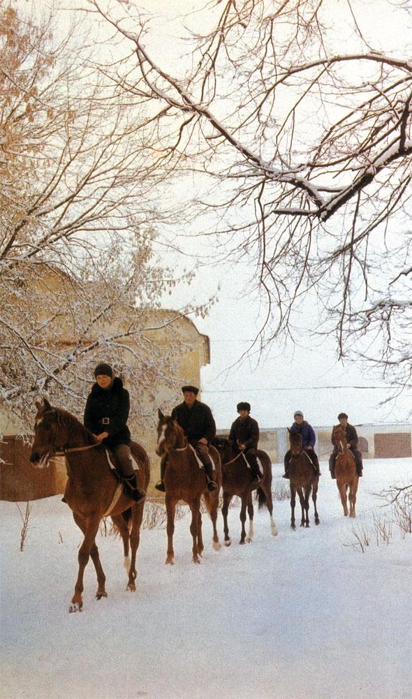 Тренировка спортивных лошадей в Опытном конном заводе