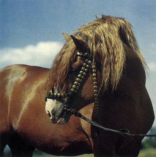 На лошади подвозят солому и на ферму, и своей корове