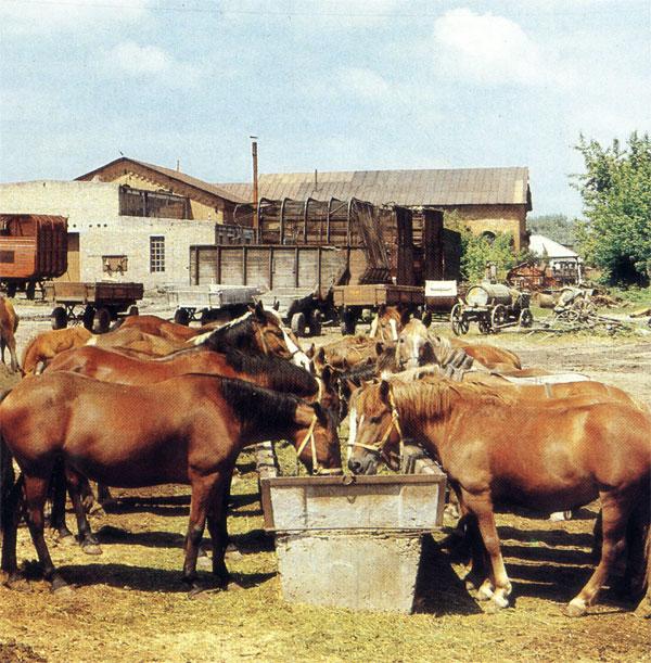 Отдых на конном дворе