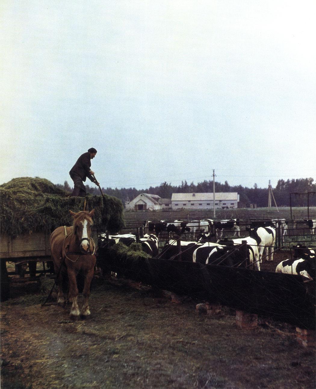 Такая лошадь подвезет корм не одному десятку коров