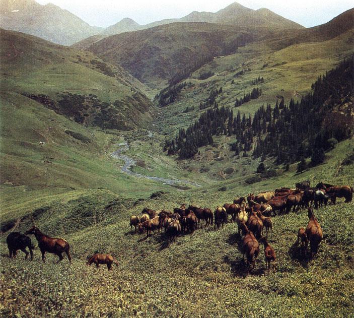 Табун дойных кобыл на горных пастбищах Тянь-Шаня