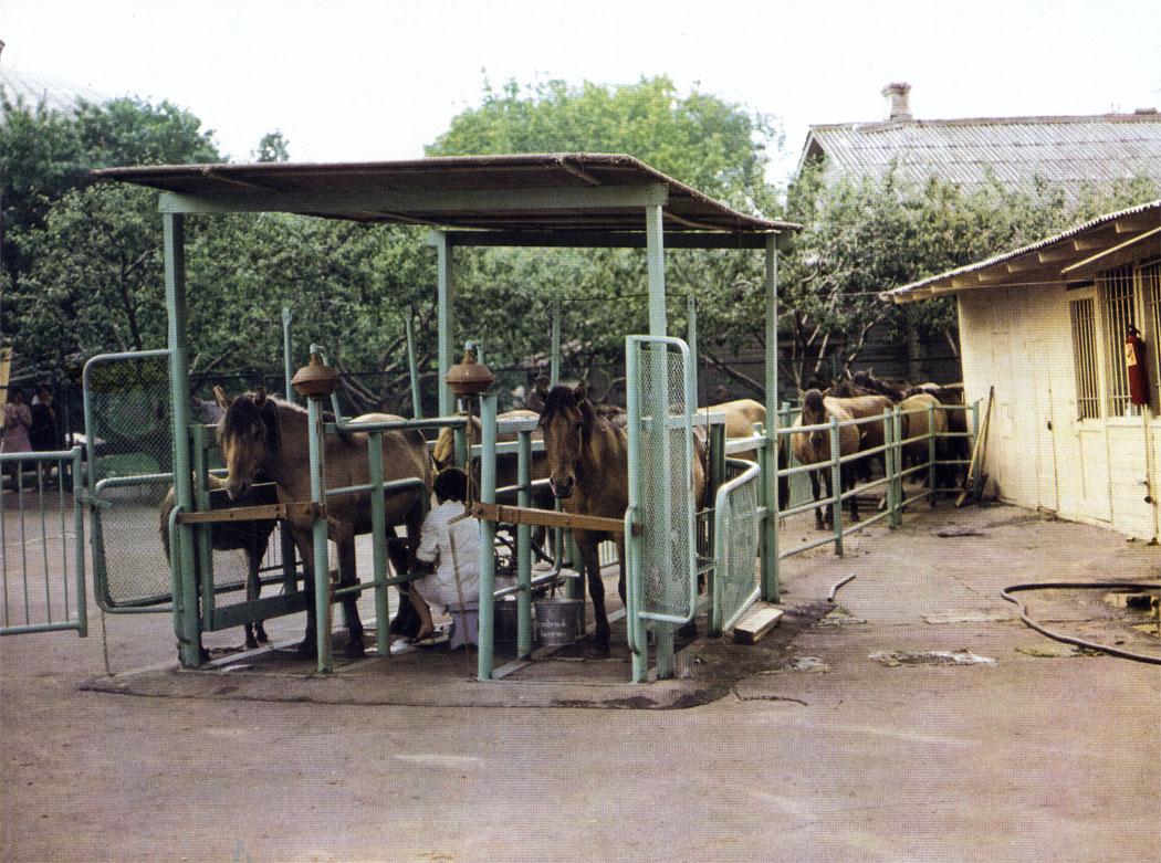 Специальные установки для доения кобыл