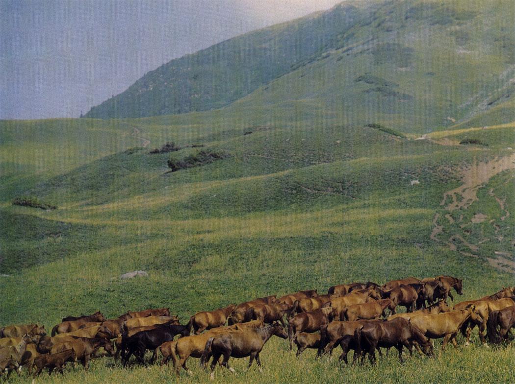 На склонах гор табуны можно пасти круглый год