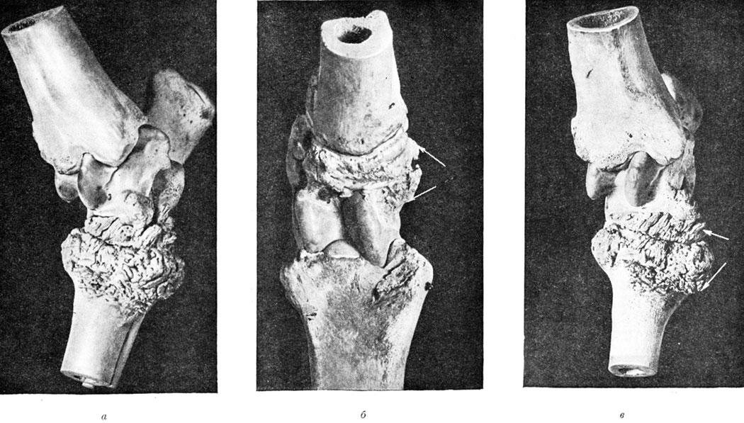 Порок скакательного сустава лошади деформация дистального сустава